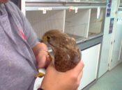 Vogelopvangcentrum